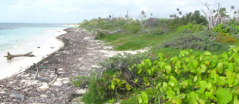 Coastal Strand Vegetation in the Yucatan, Mexico