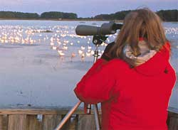 spotting birds with a telescope, photo by John & Karen Hillingsworth, courtesy of US Fish & Wildlife Service