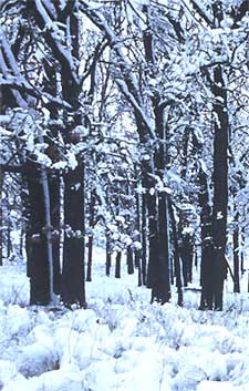 Winter botany, photo courtesy of U.S. Fish and Wildlife Serivce, taken by Robert A. Karges